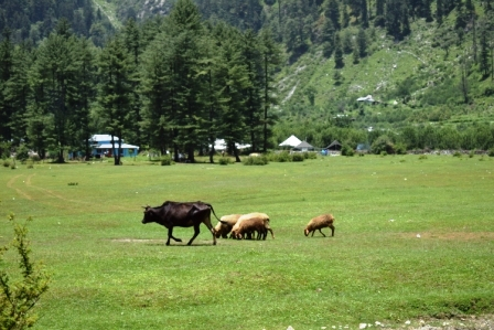 Himachal 9 days tour from Chandigarh